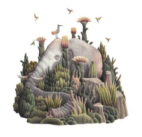 Hiding Creatures Atlas, illustrazioni di Daniele Castellano selezionate per la Mostra Illustratori della Bologna Children's Book Fair 2017