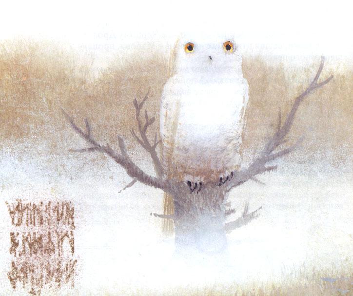 Illustrazione: Igor Olejníkov